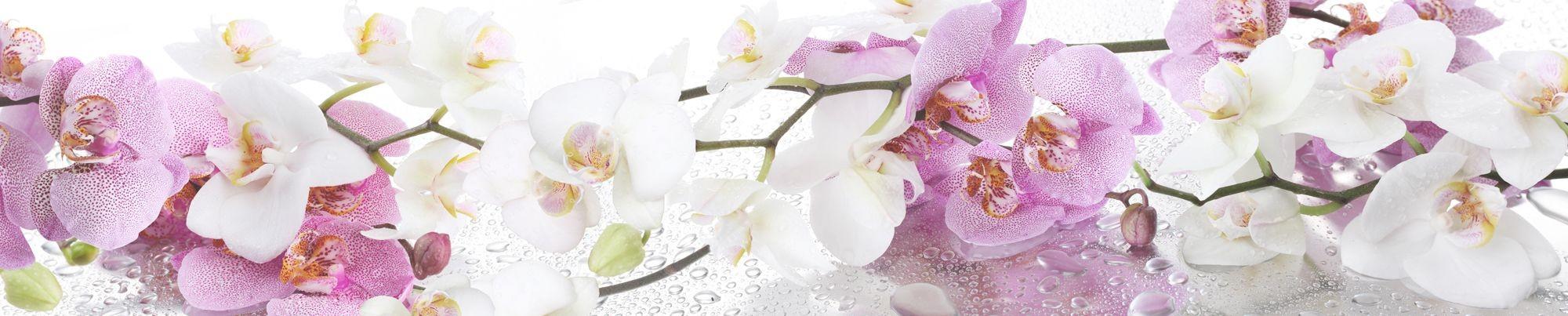фото на стекле ветки орхидеи выбору места