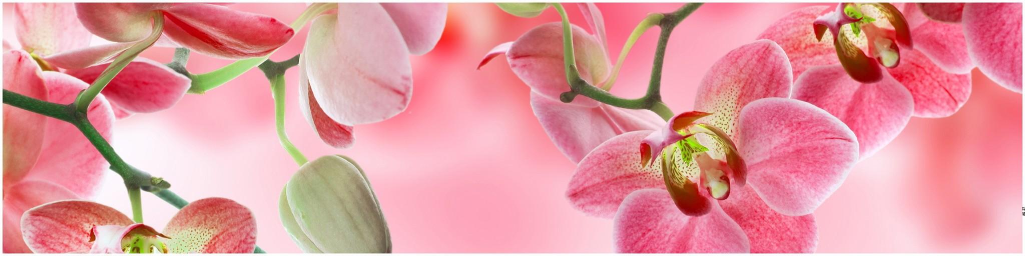 смогут наблюдать фото панелей мдф с цветами важно