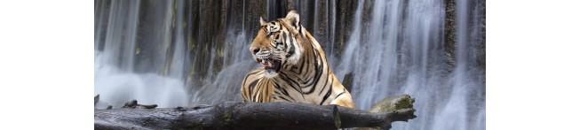 Кухонный фартук Тигр 1