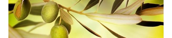 Кухонный фартук Оливковая ветвь